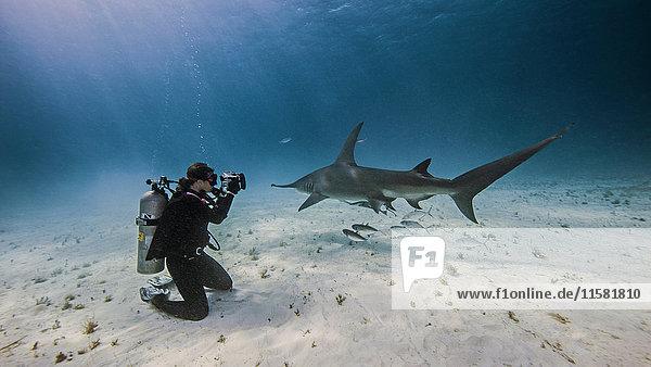 Unterwasseraufnahme einer Unterwasserfotografin  die vom Meeresboden aus fotografiert