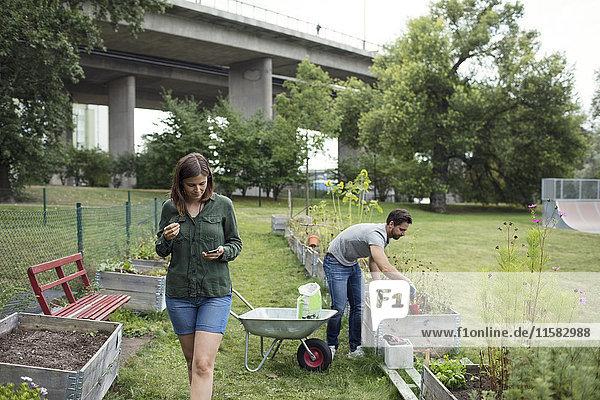 Mittlere erwachsene Frau  die das Handy benutzt  während der Mann im Stadtgarten arbeitet.