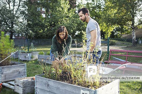 Mittlerer Erwachsener Mann und Frau beim gemeinsamen Pflanzen im Stadtgarten