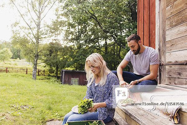 Freunde schneiden Bio-Gemüse zusammen  während sie vor der Hütte sitzen.