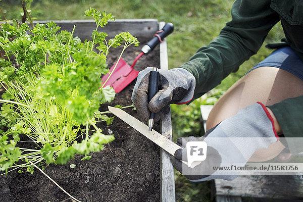 Mittelteil des Frauenschreibetiketts für Pflanze im Stadtgarten