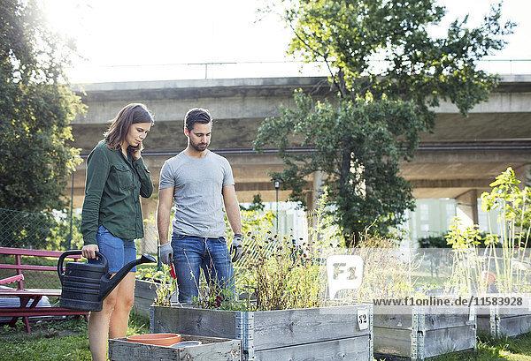 Mittleres erwachsenes Paar untersucht Pflanzen im Stadtgarten