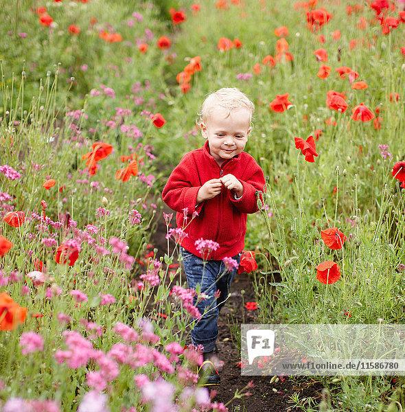 Kleinkind Junge geht im Blumenfeld spazieren