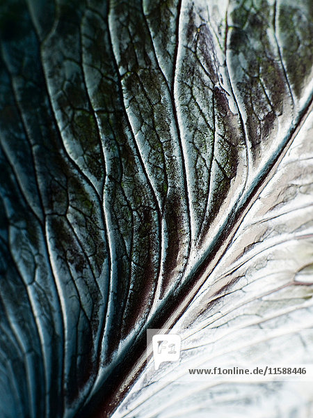 Nahaufnahme eines Kohlblattes
