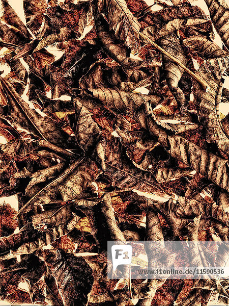 Stapel Kastanienblätter