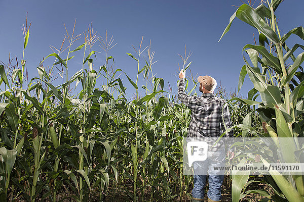 Landwirt kontrolliert Ernte