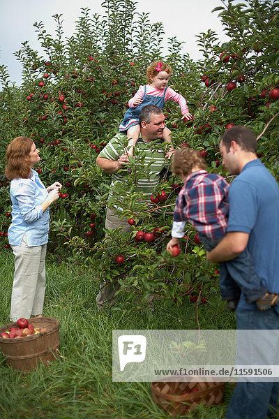 Familie pflückt Äpfel im Obstgarten
