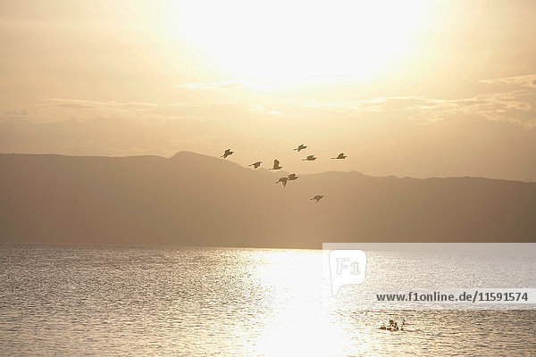 Vögel fliegen über den See