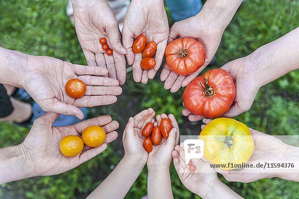 Hände von fünf Personen  die verschiedene Tomatenarten halten.