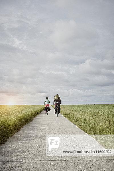 Germany  Schleswig-Holstein  Eiderstedt  couple riding bicycle on path through salt marsh