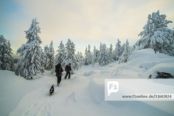 Caucasian men hiking in snowy forest with dog