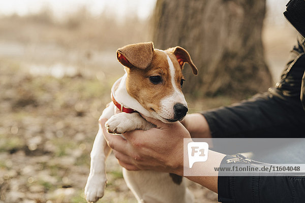 Hands of person lifting dog