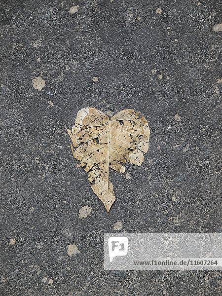 Direkt über dem Schuss des trockenen Blattes auf der Straße