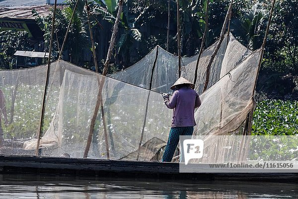 Woman checking fish nets on Binh Thanh Island at Sadec  Mekong River Delta  Vietnam.