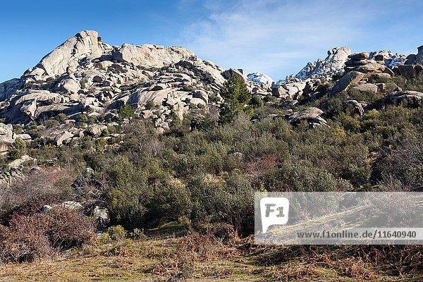 Pedriza Anterior Regional Park del Ato Manzanares. Manzanares el Real. Madrid. Spain. Europe.
