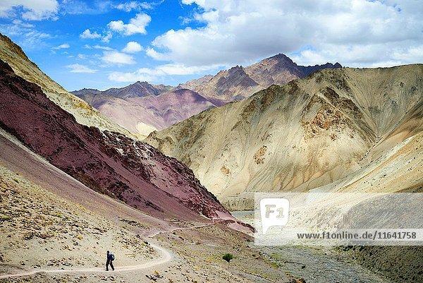 India  Jammu and Kashmir State  Himalaya  Ladakh  Hemis National Park  Markha valley trek  hiker on the trail leading to Yurutse (4100m)