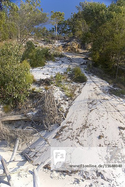 Sand dunes  at North White Cliffs  subject to constant erosion by water  Fraser Island  Queensland  Australia. (Photo by: Auscape/UIG)