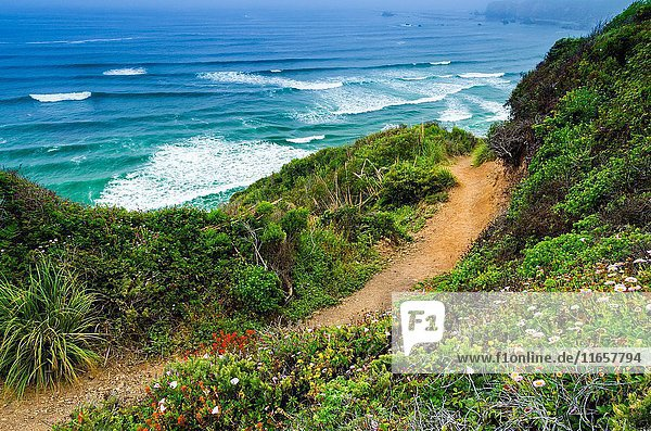 The trail to Sand Dollar Beach  Los Padres National Forest  Big Sur  California USA.