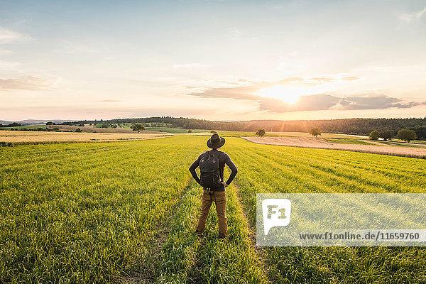 Mid adult man  standing in field  rear view  Neulingen  Baden-Württemberg  Germany