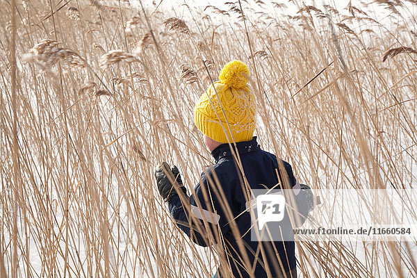 Junge geht durch langes Gras  in schneebedeckter Landschaft  Rückansicht Junge geht durch langes Gras, in schneebedeckter Landschaft, Rückansicht