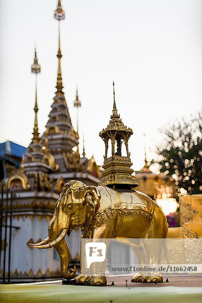 Golden elephant statue and spires of buddhist temple  Chiang Mai  Thailand