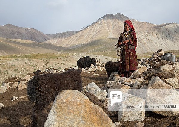 Wakhi nomad woman taking care of her yaks  Big pamir  Wakhan  Afghanistan.