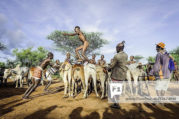 Gathering the cattle for a bull jumping ceremony. A rite of passage from boys to men from the Hamer tribe.