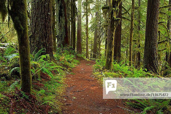 Butte Creek Falls Trail  Santiam State Forest  Oregon.