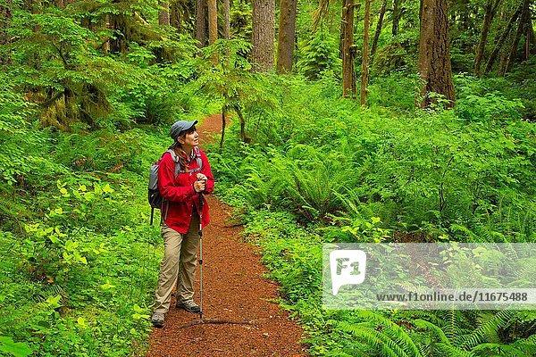 Shellburg Falls Trail  Santiam State Forest  Oregon.
