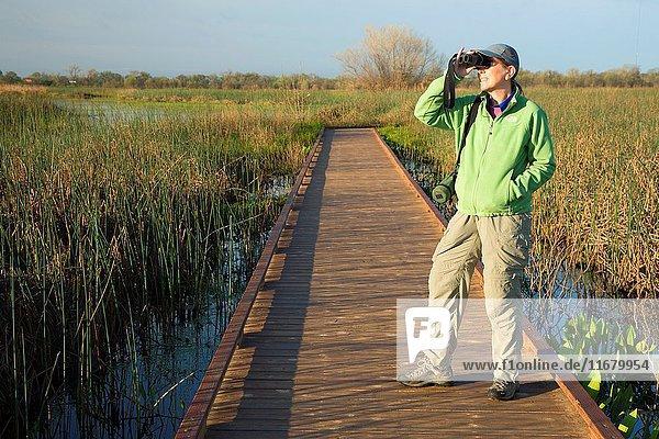 Birding on Boardwalk Trail  Cosumnes River Preserve  California.