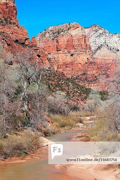 Virgin River in spring flows below vertical canyon walls in Zion National Park Utah