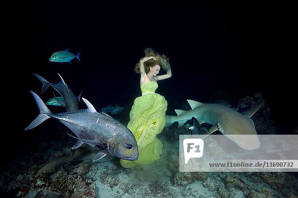 Young beautiful woman in yellow dress posing underwater with Tawny nurse sharks (Nebrius ferrugineus)  night shooting  Indian Ocean  Maldives.