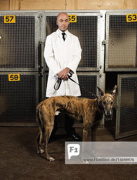 Hundeführer  der vor einem Käfig in einer Windhundrennbahn-Zuchtstätte steht und einen gestromten Hund an der Leine hält.