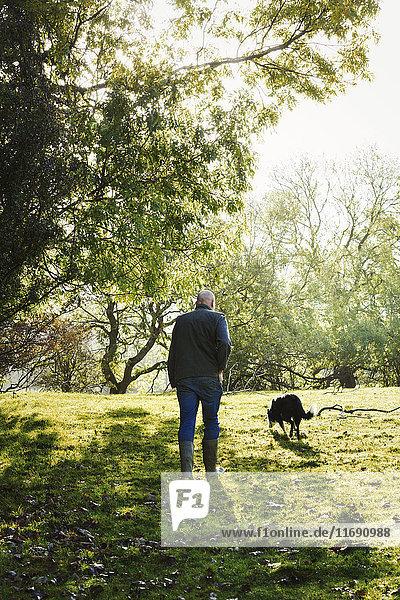 Rückansicht eines Schafzüchters  der mit seinem Schäferhund über eine Wiese läuft.