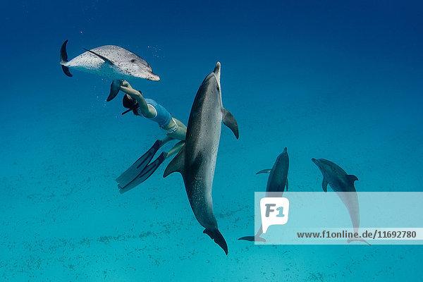 Schnorchler beim Schwimmen mit Delfinen