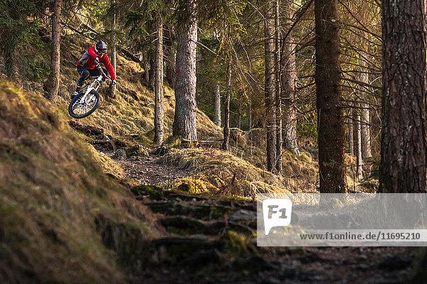 Mountainbikerinnen fahren Waldtreppen hinunter
