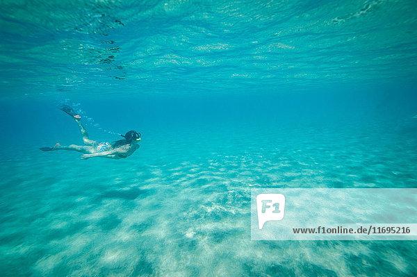 Unter Wasser schwimmende Schnorchler