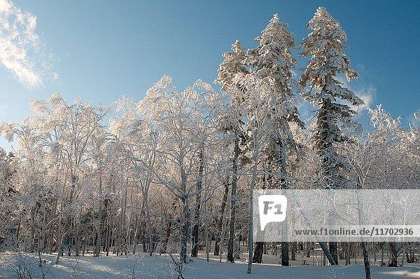 Landscape in winter of Hokkaido  Japan.