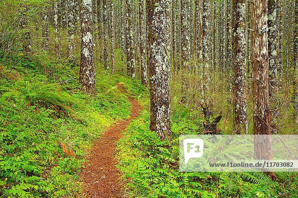 Pioneer Indian Trail  Siuslaw National Forest  Oregon.