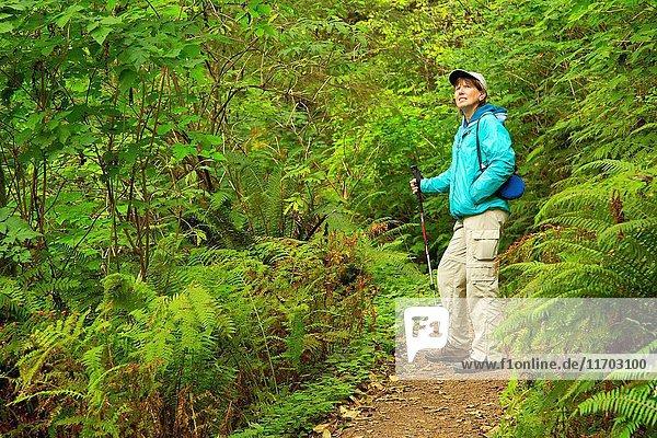Giant Spruce Trail  Cape Perpetua Scenic Area  Siuslaw National Forest  Oregon.