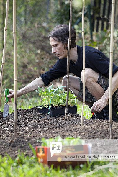 Mann Gartenarbeit im Kleingartenbereich