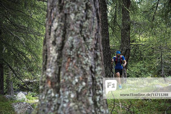 Italien  Alagna  Trailrunner unterwegs im Wald