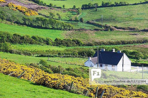 Ireland  County Donegal  Fanad Peninsula  Fanad Head  landscape.