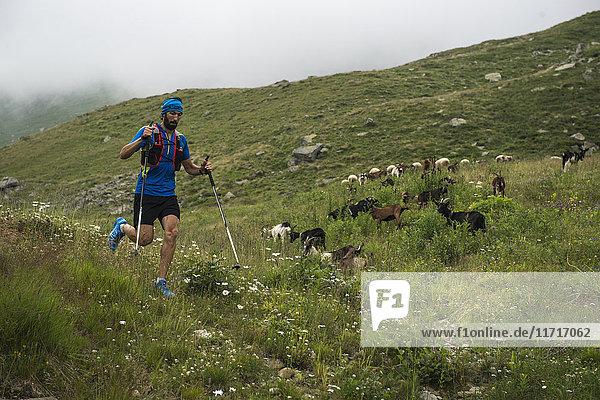 Italien  Alagna  Trailrunner unterwegs auf der Alm