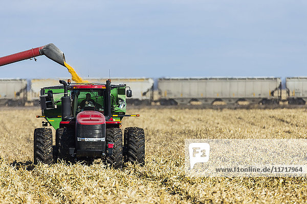 'A farmer harvests his corn crop near Groton; South Dakota  United States of America'