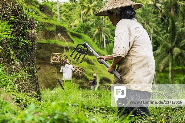 'Farmers working on rice terraces  near Ubud; Tegallalang  Bali Island  Indonesia'