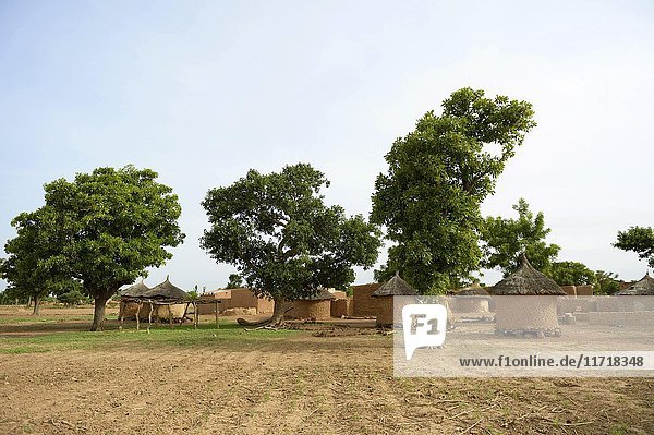 Small village with mud huts  Toeghin  Oubritenga province  Plateau Central region  Burkina Faso  Africa