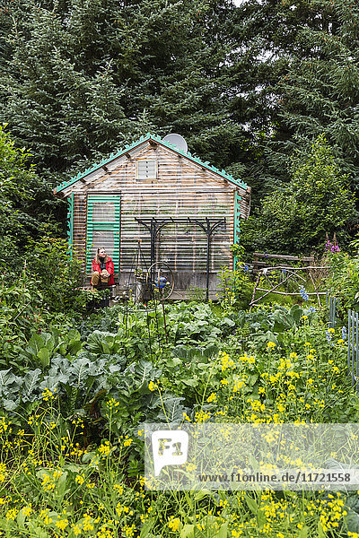 Woman sits on the steps of a greenhouse surrounded by a lush garden  Seldovia  Southcentral Alaska  USA