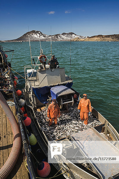 A commercial fishing crew ties up to a tender to deliver its catch during the Togiak Herring fishery in Kulukak Bay  Bristol Bay region of Alaska  Southwest Alaska  USA