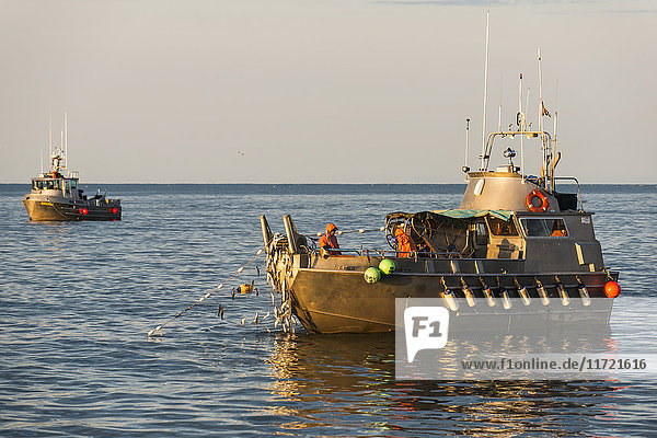 A commercial fishing boat hauls in a load of herring in Kulukak Bay in the Bristol Bay region of Alaska  Southwest Alaska  USA